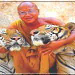 Ручные тигры в Буддийском монастыре