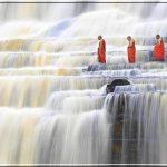 Фото дня — ламы медитируют