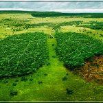 На спасение мирового леса выделено 280 млн. долларов.