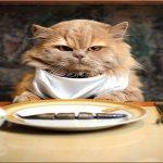 Когда я ем…, я глух и нем….. Когда я пью…., я пообщительнее….