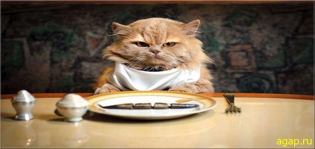 Когда я ем..., я глух и нем..... Когда я пью...., я пообщительнее....))))