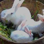 Разведение кроликов — самый выгодный бизнес…